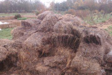 Conservation humidité le paillage